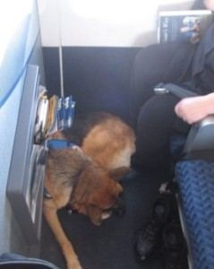This picture features a dog in the feet area of the bulkhead seating on an airplane. Photo from the website: http://www.gooddoghometraining.com/service_dog_training.htm