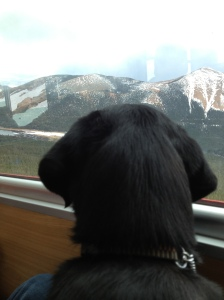 Makiko looking out the window on the ride up to Pikes Peak