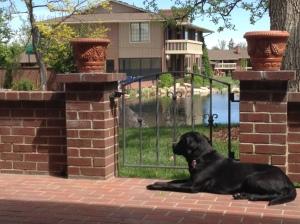 Makiko chilling on the back brick patio