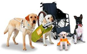 A yellow labrador with a traditional guide dog harness, a small dog with an orange desk, another yellow labrador with a vet on and another dog with a wheelchair.