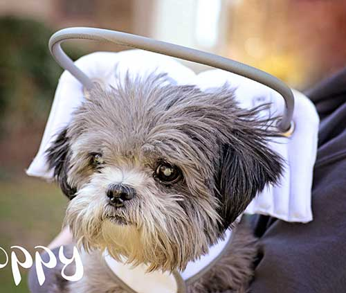 how to help dogs with visual impairments