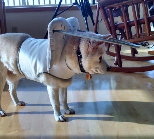 Assistive Technology (AT) for Blind Dogs — wait, what?
