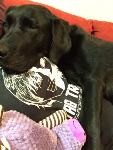 Black Labrador guide dog is centered in the frame on Jessica's chest. Her eyes are closing as she rests with her purple toy near her paw.