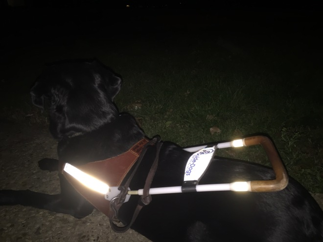 This picture is with flash. You can almost pretty much just see Makiko's harness, especially with the reflective strips, and you can see a little bit of Makiko but since she is black it is hard to see her. Outside is almost completely pitch black.